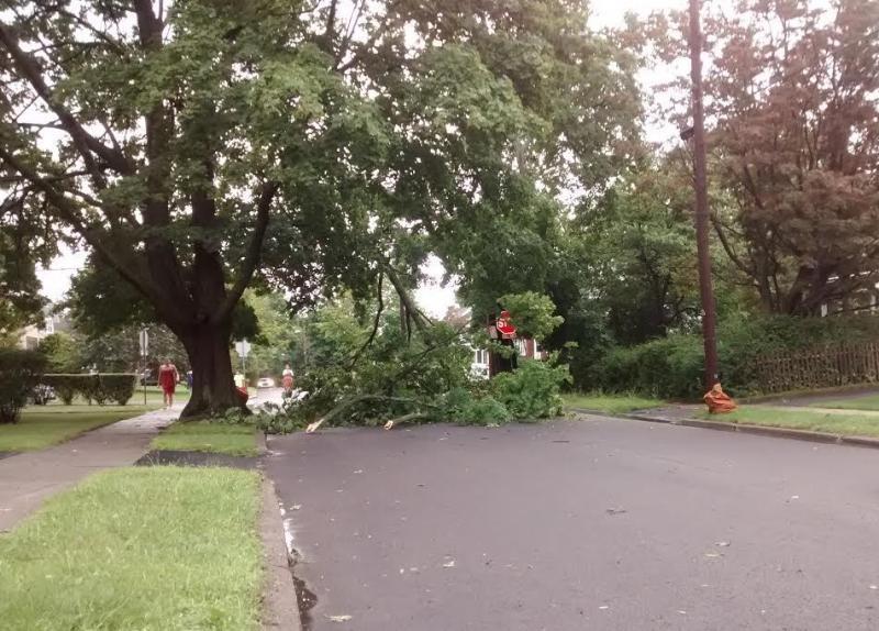 tree down along a neighborhood street