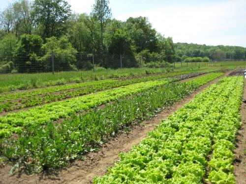poughkeepsie farm project Herb gardening at poughkeepsie farm project sponsored by: poughkeepsie farm project minimum age: 10 join our team of herbalists and herb enthusiasts to tend poughkeepsie farm project's meditation garden.