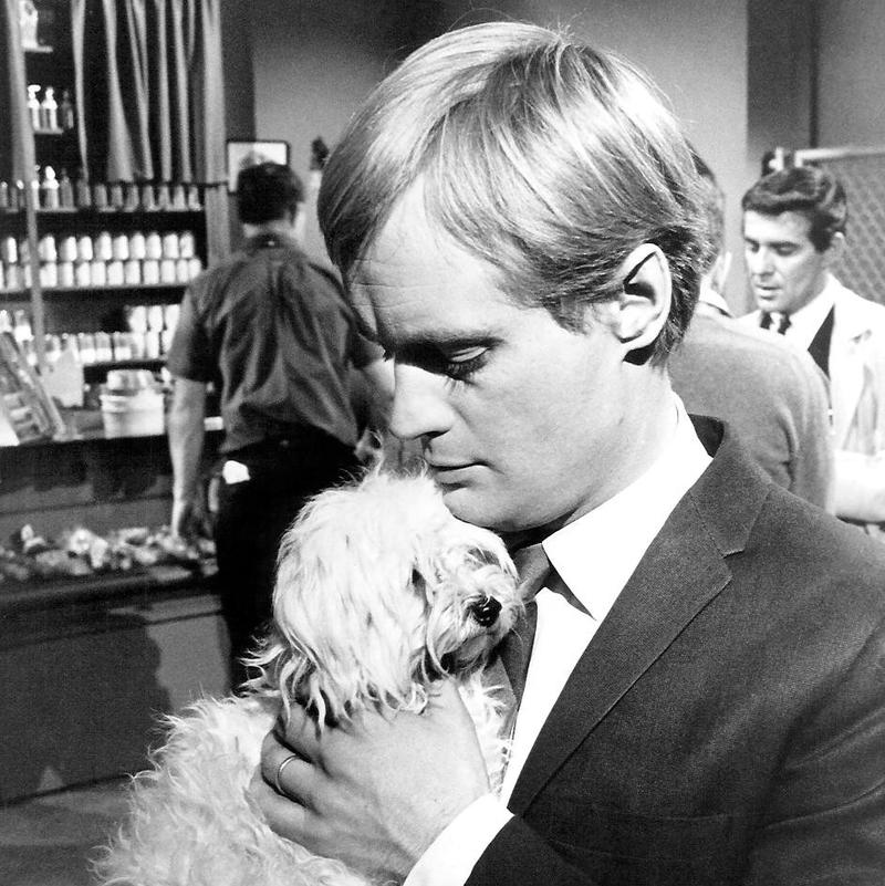 David McCallum as Ilya Kuryakin on The Man from U.N.C.L.E. holding a small dog