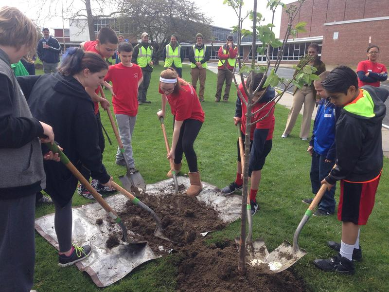 Reid Middle schoolers shovel dirt onto one of the 2,400 trees to be planted in Pittsfield.