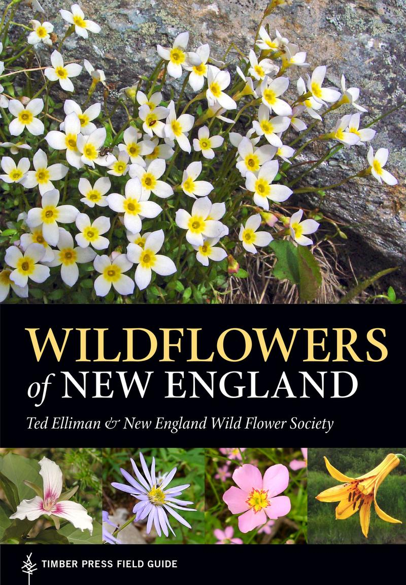 Book Cover - Wildflowers of New England