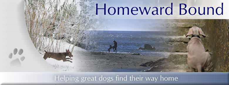Homeward Bound header image