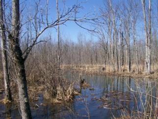 Black Creek Marsh Wildlife Management Area, Albany County