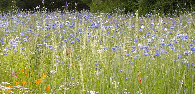 Wildflowers at Bartholomew's Cobble