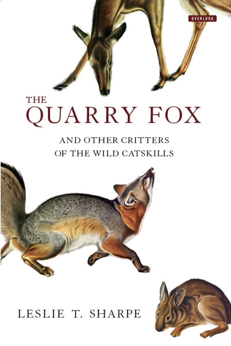 Book Cover - The Quarry Fox