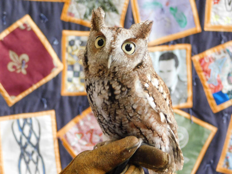 Screech owl from Adirondack Wildlife Refuge at environmental trade fair