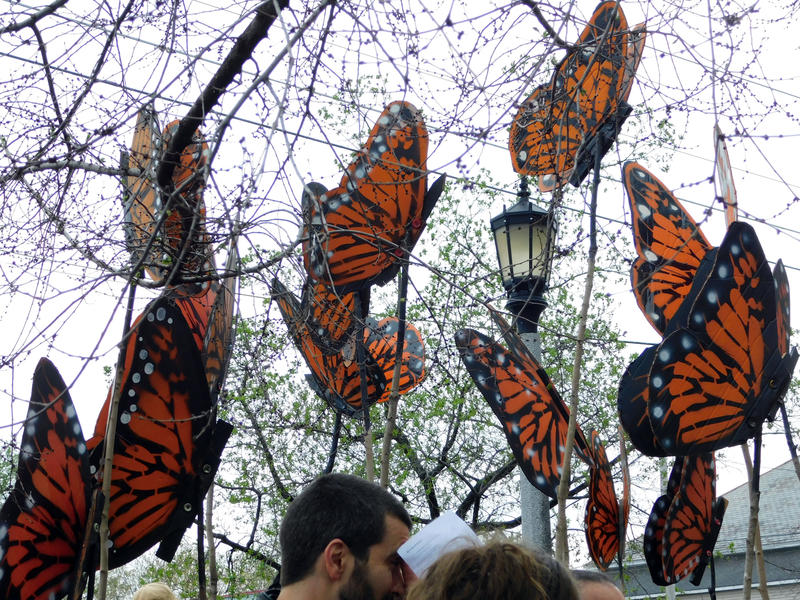 May Day butterflies