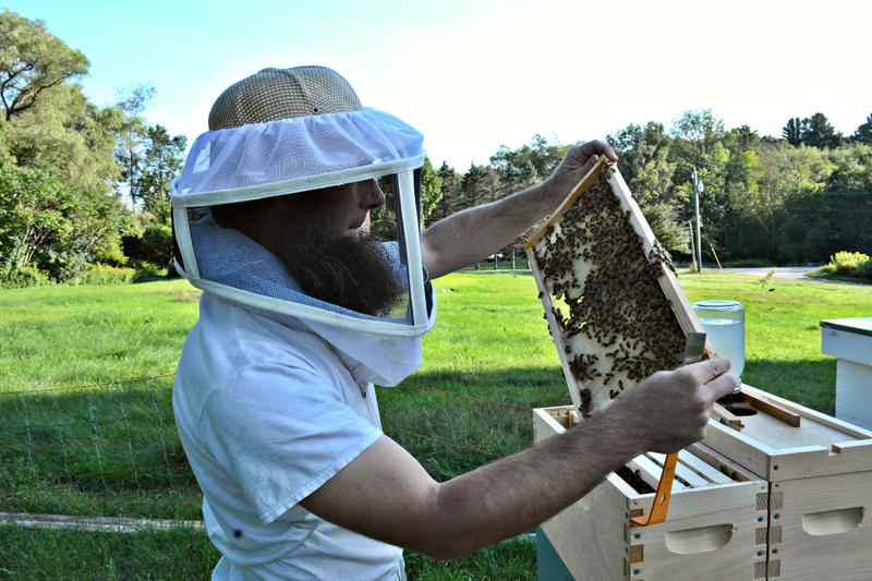 Wheeler tends to the bees for honey.