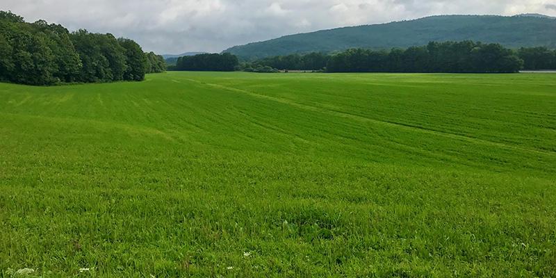 Vermont Land Trust's Dummerston land site