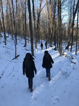 A walk in the woods on New Year's Day