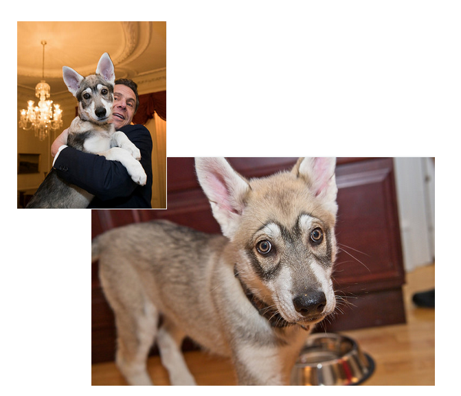 "In these pictures from Gov. Andrew Cuomo's flickr account,, the governor holds his new dog ""Captain"" during a conference of mayors in Albany, N.Y."
