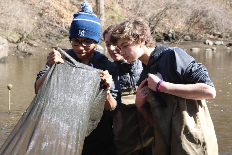 Student volunteers check a net to see if it caught any baby eels.