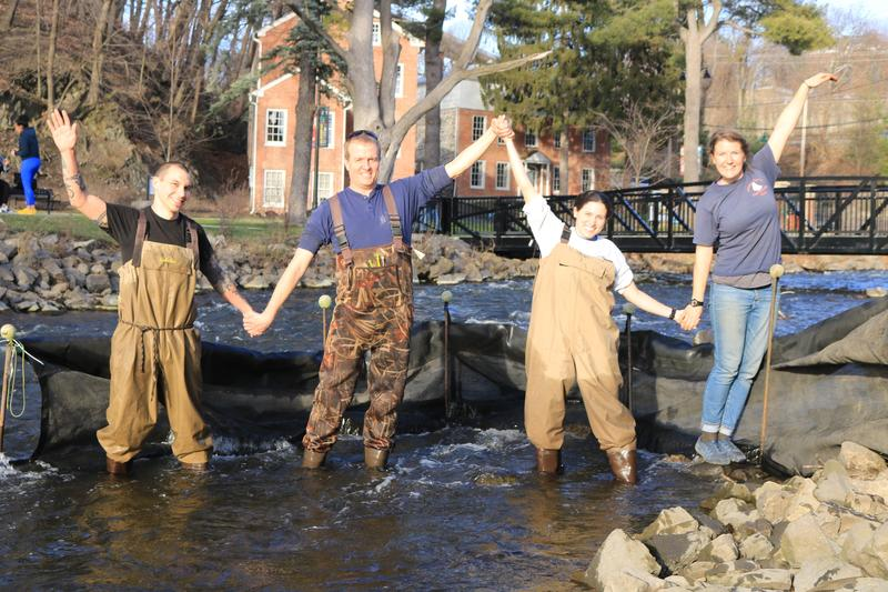 DEC's Chris Bowser joins happy eelers in the water.