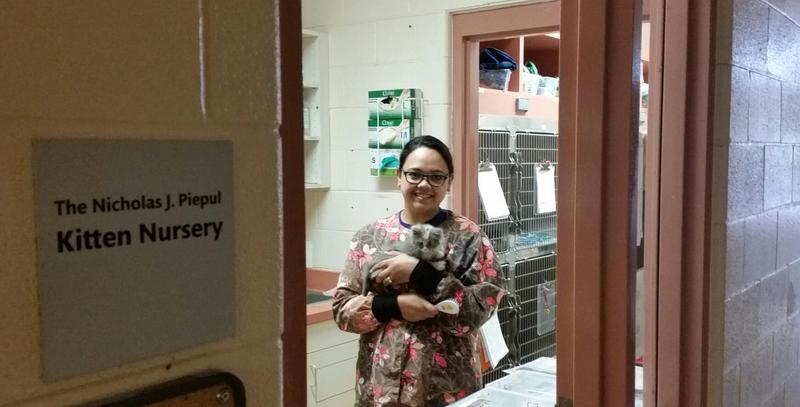 Sam Renaud, a volunteer at Dakin Humane Society in Springfield, MA, cares for an orphaned kitten