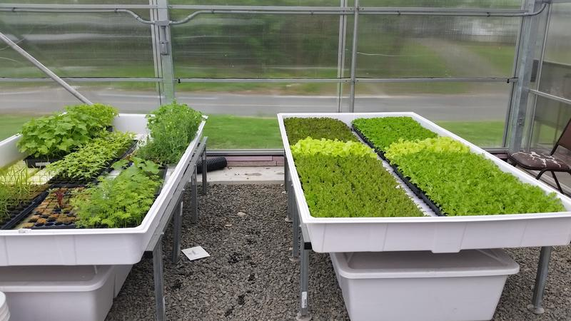 A variety of lettuces, greens, and herbs will be grown in the greenhouse year-round.