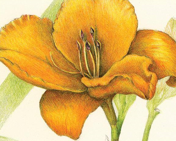 Day Lily painting by Wendy Hollender