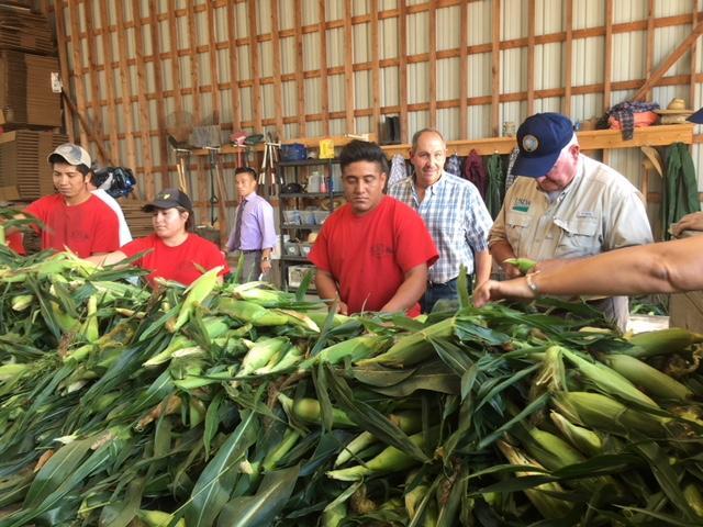 Sorting corn at Altobelli Family Farm, Kinderhook, NY