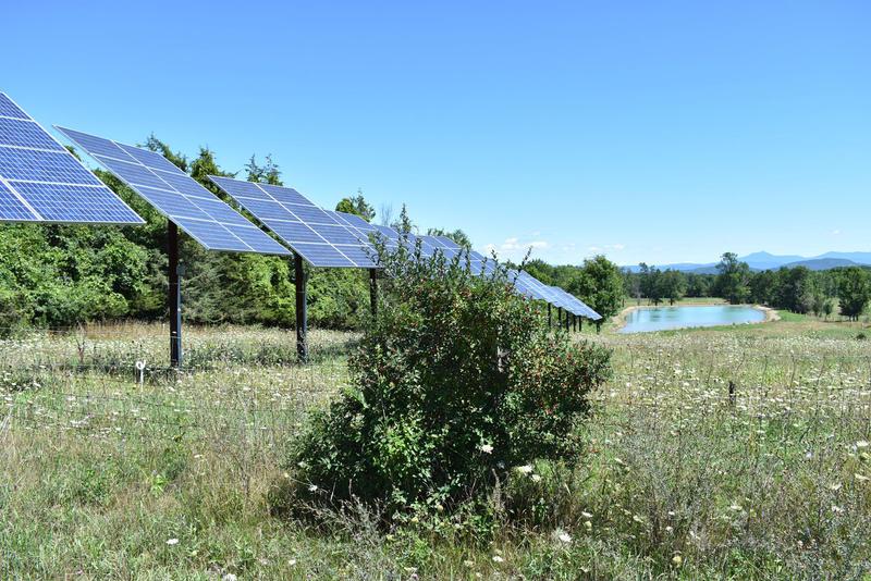 Solar array at the Essex Farm