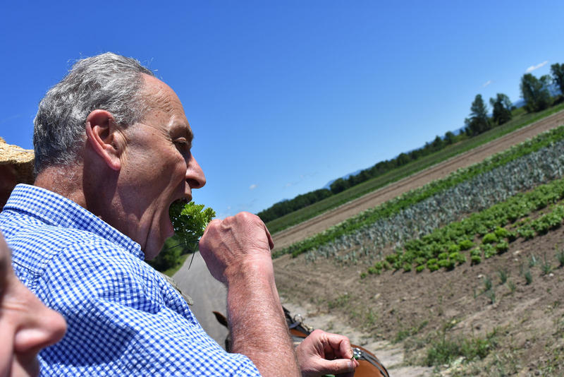 Senator Schumer tastes fresh parsley picked from the plants as he passes.