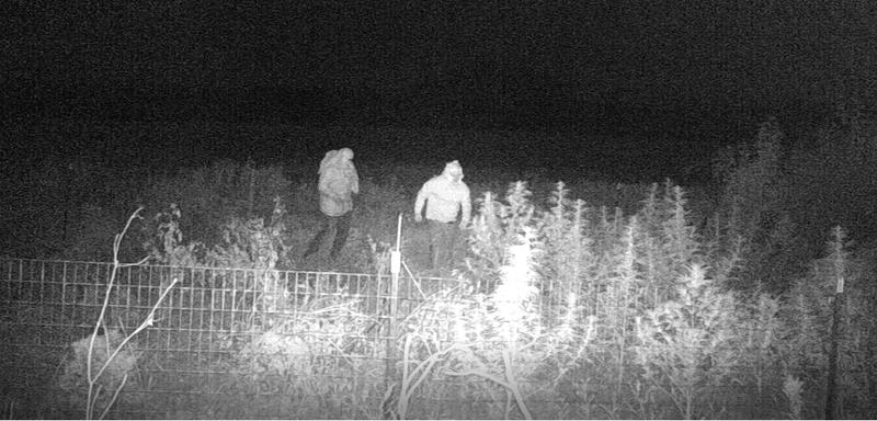 Hemp theft suspects