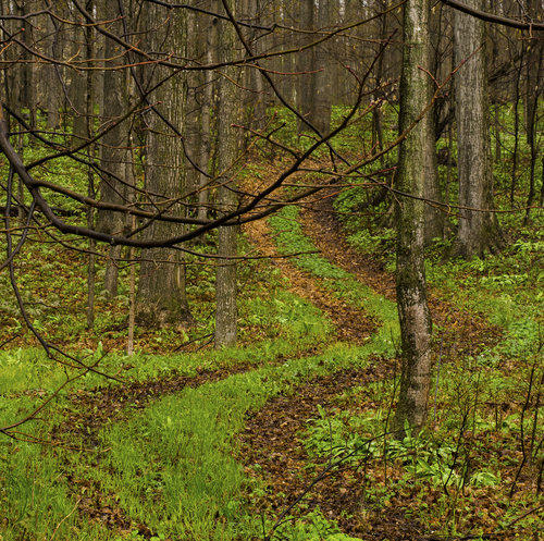 path through a lightly wooded area