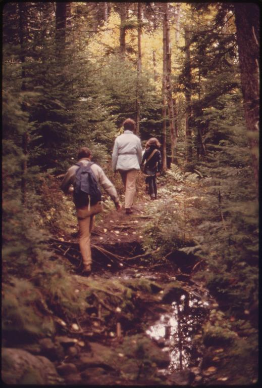 Mud holes and exposed tree roots indicate heavy use of a trail to Brothers Mountain in the Adirondack Forest Preserve