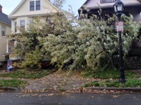 Tree uprooted on Fairfield near Main Street in Buffalo