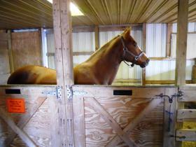 Hoskins horse