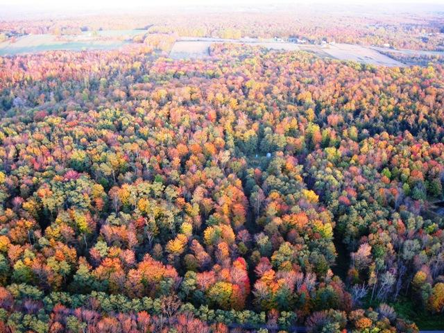 Bright fall colors from the sky in the balloon
