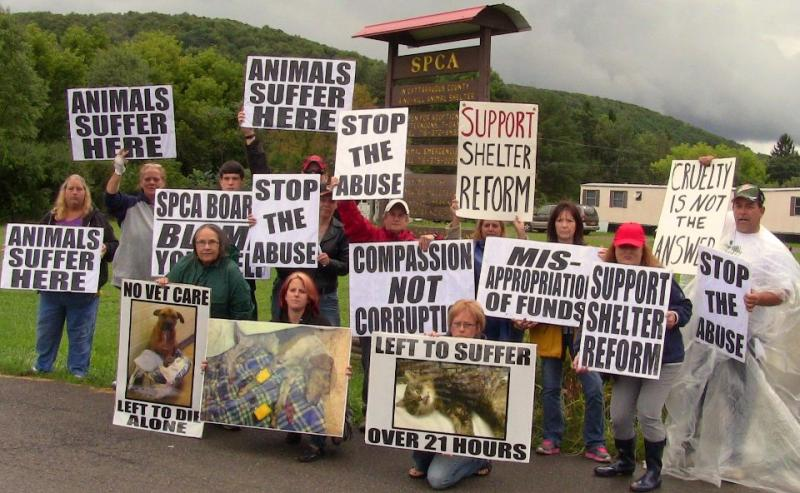Animal Allies of Western New York
