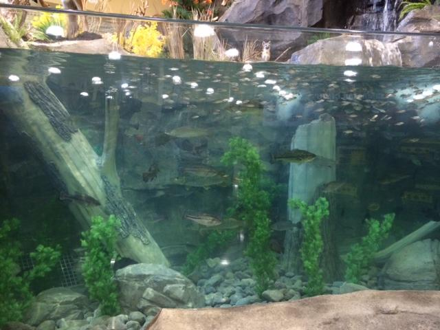 The giant fish tank built into the mountain inside Cabela's.