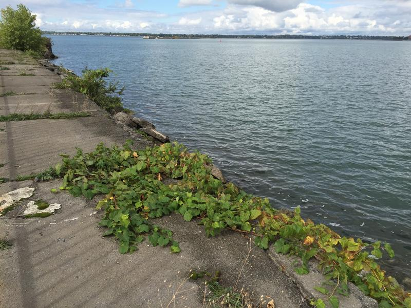 Worn seawall at Lighthouse Point will be inspected by the U.S. Army Corps of Engineers for necessary structural repairs.