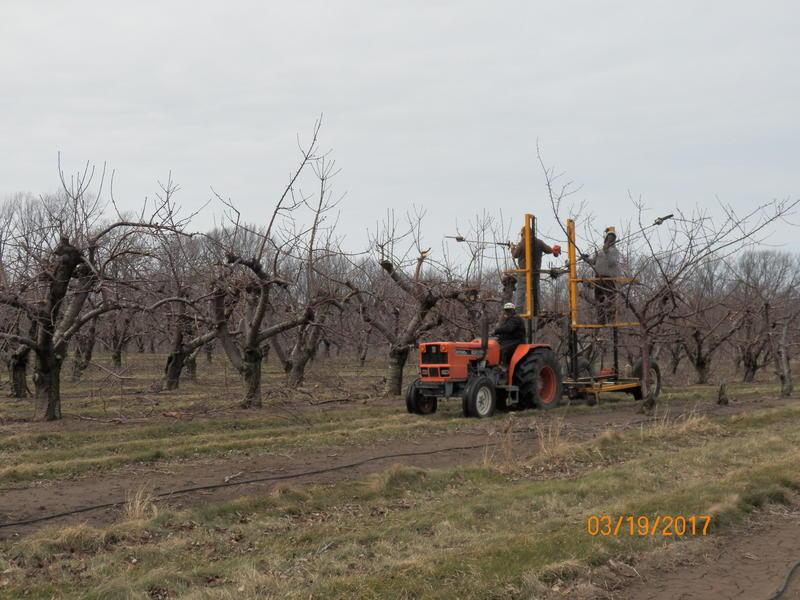 A mobile pruning platform