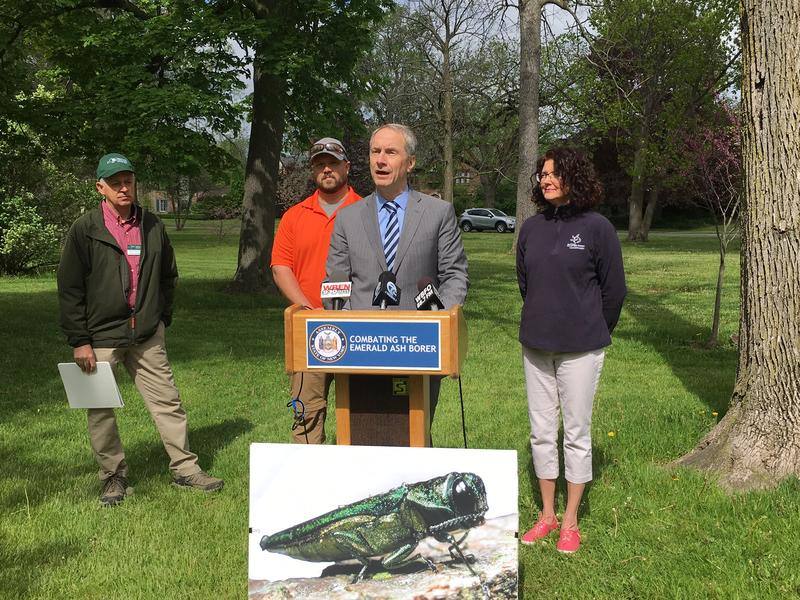Assemblyman Sean Ryan with an enlarged photo of an EAB. CREDIT CHRIS CAYA WBFO NEWS