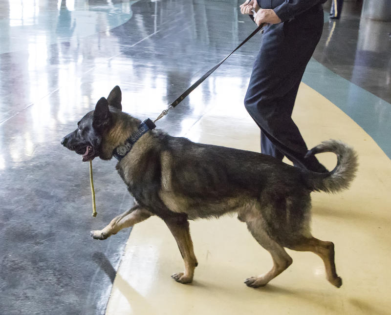 Lehner's K-9 partner Shield was on the minds of many at the funeral and across Western New York
