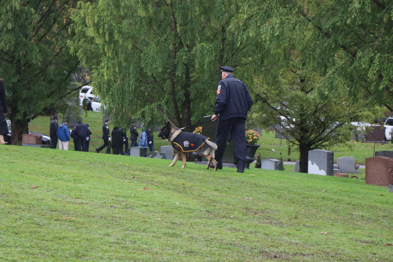 K-9 Shield stides across the grass of Forest Lawn after watching his partner, Craig Lehner, get laid to rest