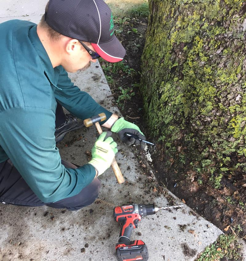 Josh Falker with Draves Tree Service taps one of Arborjet's special plugs into the base