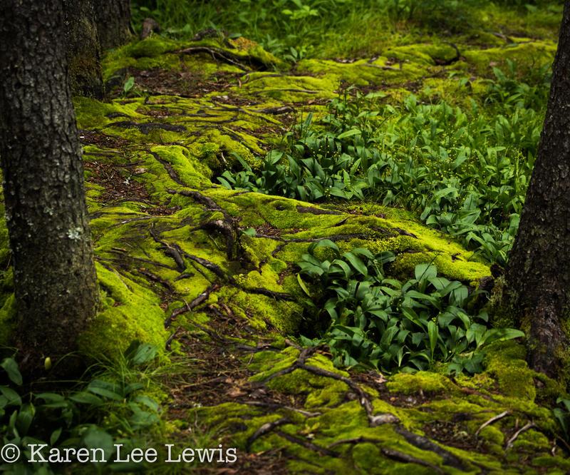 Moss n Glow