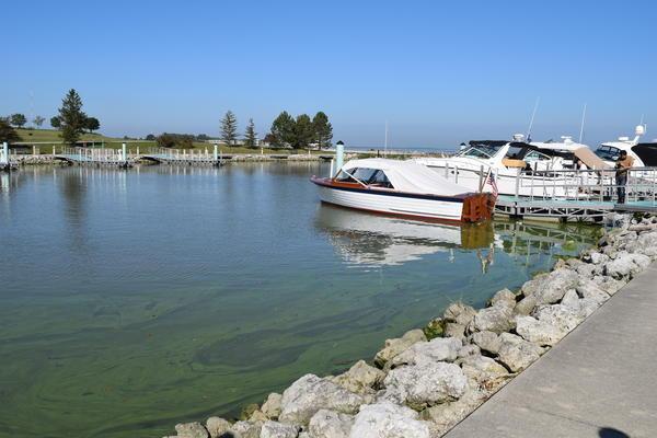 Algal bloom threatens safe drinking water.