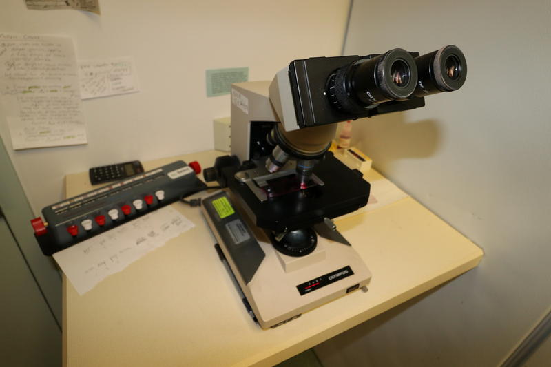 A microscope and manual counter are used to analyze slides covered in pollen grains and mold spores.