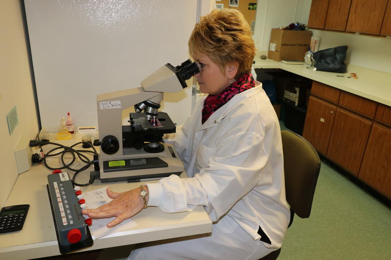 Cindy Peters counts pollen grains and mold spores.