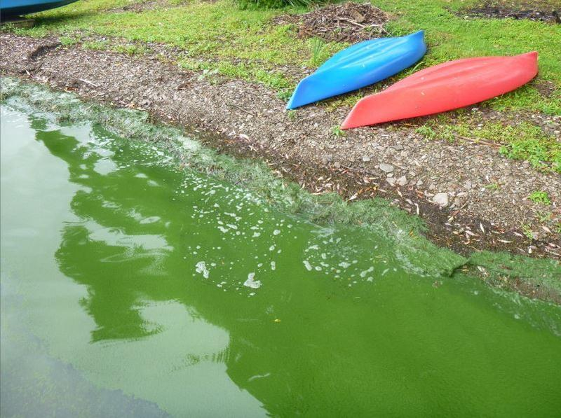 Algae bloom on Chautauqua Lake.