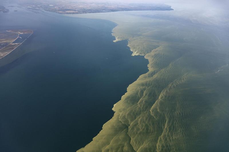 2017 algae bloom on western Lake Erie