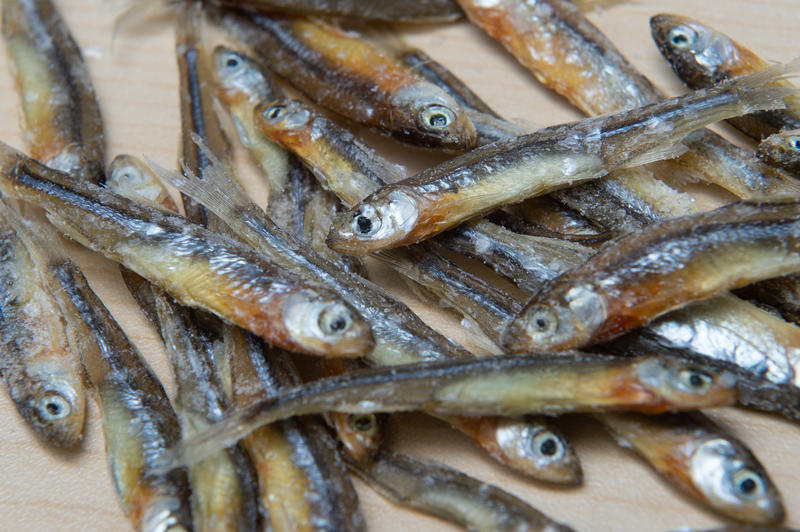Emerald Shiner minnows have been decreasing in the Niagara River.