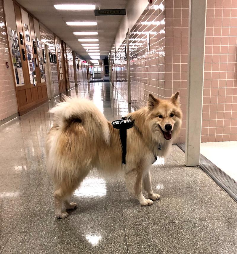 Kojak patrolling the corridors in Alden schools.