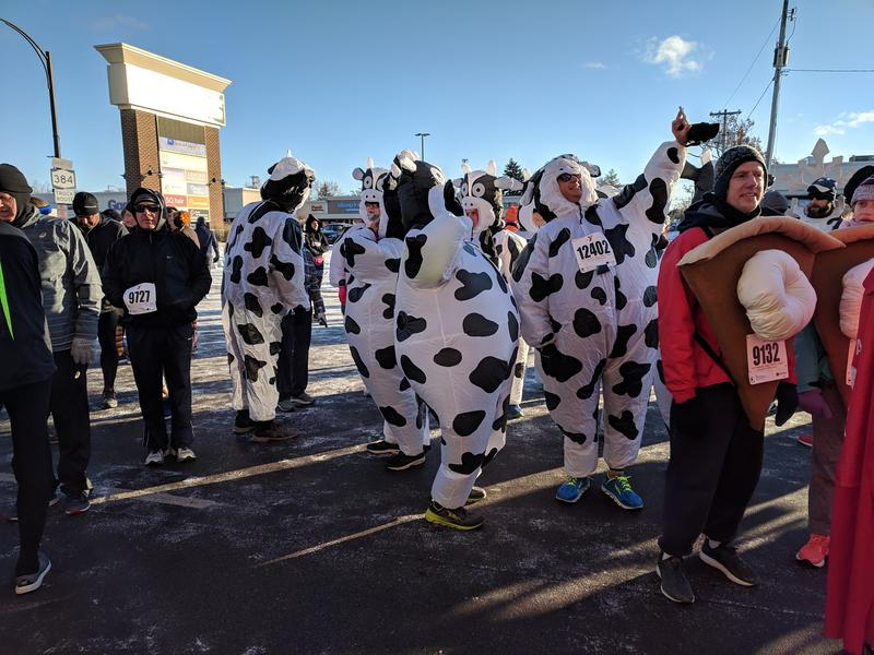 Runners participate in the Turkey Trot in all kinds of costumes, including this herd of cows.