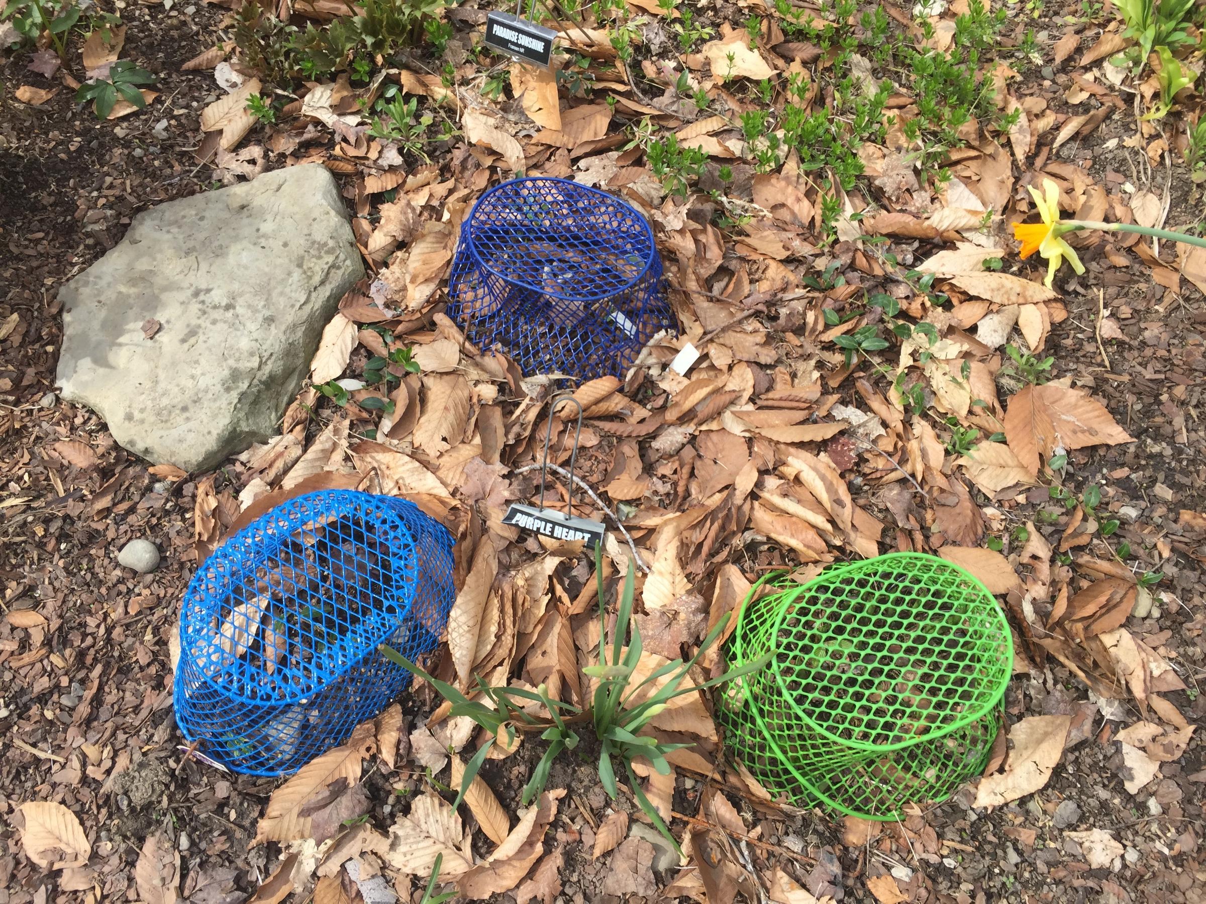 Hostas abound at Southtowns garden | WBFO