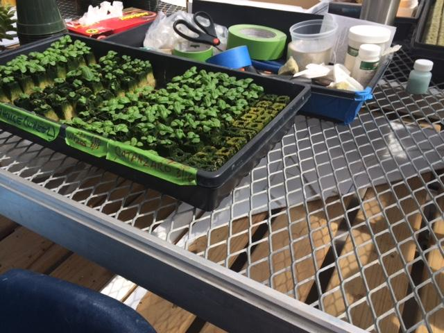 how to grow food in a greenhouse