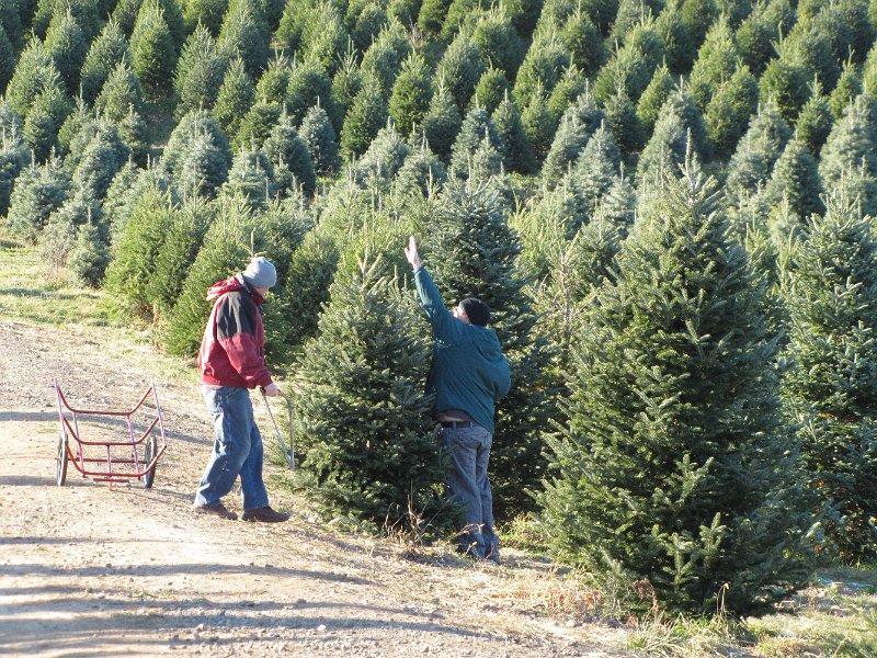 Christmas tree growers get into holiday spirit | WBFO