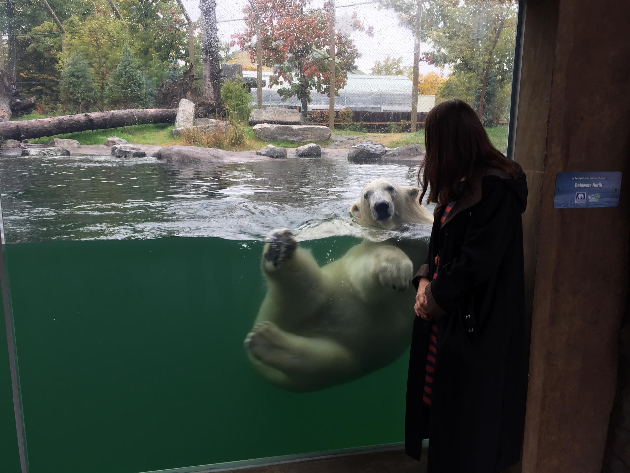 donna fernandes buffalo zoo Buffalo zoo president donna fernandes said, arctic edge is an exhibit i have  dreamed of since my first days at the zoo we are so grateful to.